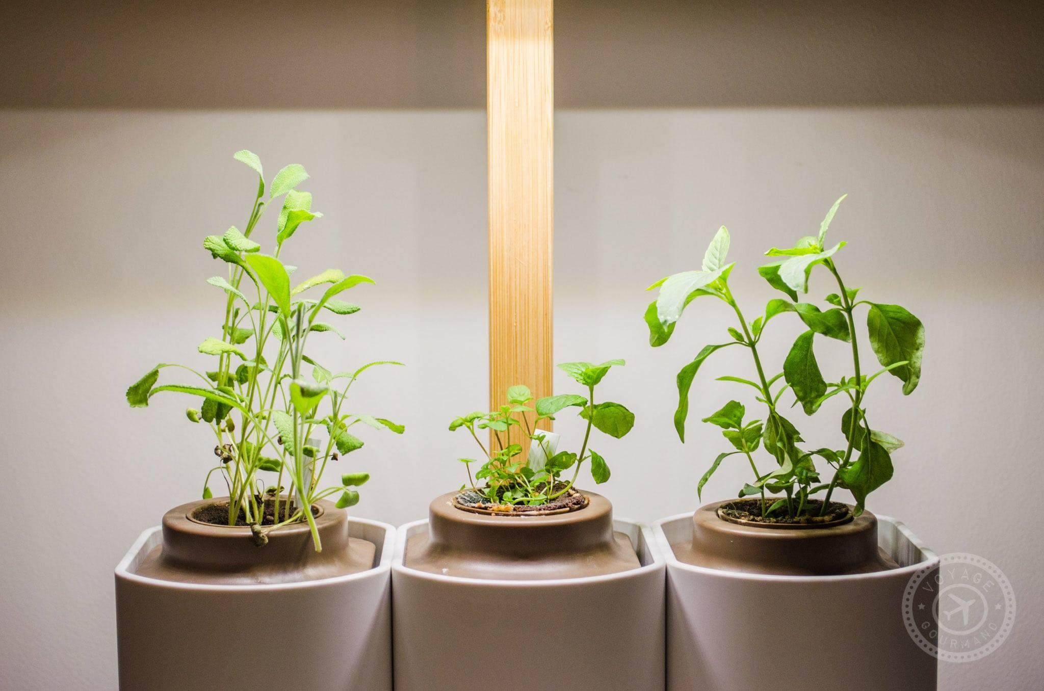 Plantes qui poussent avec Lilo de Prêt à pousser
